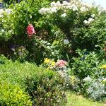 cottage garden out the front