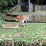 Lost World of Tambun Zoo