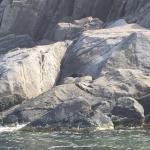 Kangaroo Island Ocean Safari Foto
