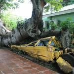 Durch einen Baum zertrümmerter Schulbus