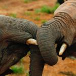 youg elephant at Ithumba