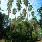 Palmeral del Zoobotánico