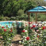 swimmingpool and rosegarden
