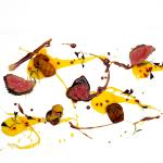 Venison, Pink Peppercorn, Cep Sauce