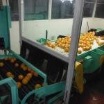 Foto de Mixon Fruit Farms