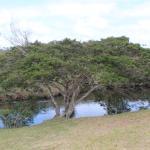 Photo de La Gran Sabana
