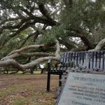 Friendship Oak Foto