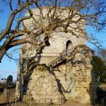 Photo de Château de Chinon