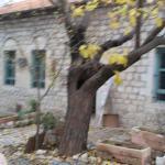סיורים מודרכים בראש פינה העתיקה והיפה... סיור בוואדי ראש פינה,בית הכנסת הישן,בית מוסף אפנדי,מלון