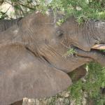 Photo de Full-Day Tarangire National Park Tour