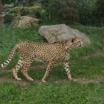 Im Kölner Zoo