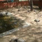 Parque Zôo-botânico da Caatinga