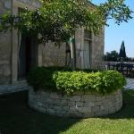 carrubo e muro a secco in giardino interno