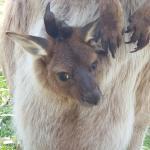 Foto de Urimbirra Wildlife Park