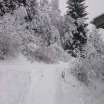 Zell ski 2
