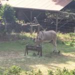 Foto di Kona Coffee Living History Farm