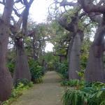 Orto Botanico di Palermo Foto
