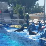 Photo de Marineland Majorca