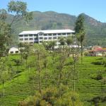 stabilimento essicazione del thè