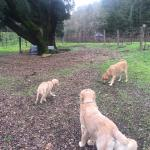 The family of Golden Retrievers at Tres Sebores