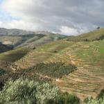View into the Douro hills and vineyards