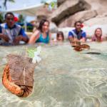 Kids Koro Coconut Husk Boat Race