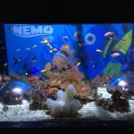 Underwater World Sea Life Mooloolaba Foto