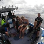 Photo de Dolphin Pacific Diving and Whale Watching