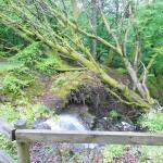 Nature is calling..at Bracklinn Falls