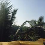 Photo de Bougainvillea Guest House Goa