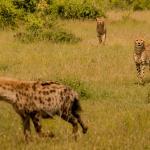 Cheetahs, hyenas, & other amazing experiences