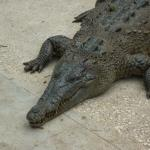 famous croc from 007 film