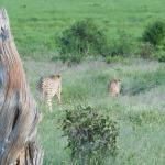 African Memorable Safaris Foto