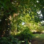 The wonderful garden and bird habitat