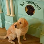 Photo de Dog Mountain