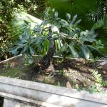 Foto de Phuket Botanic Garden
