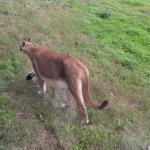 Oatland Island Wildlife Center Foto