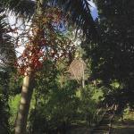 Finca Exotica Ecolodge Foto