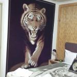 Maroochydore Beach Motel Foto