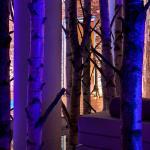le coin détente dans une forêt de bouleaux