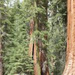 Photo of Sequoia Sightseeing Tours
