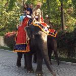 elephant ride in the grounds