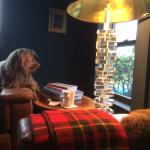 Our dog enjoying one of the common areas