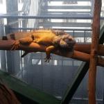 Haus des Meeres - Aqua Terra Zoo Foto