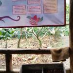 Foto de Rainforest Chocolate Tour