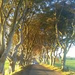 Photo de The Dark Hedges