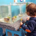 My son (2) looking at the baby crayfish in a tank