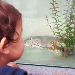 My son (2) loved seeing the fish in the tanks