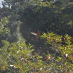Vallarta Adventures Photo