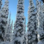 Nordic skiing